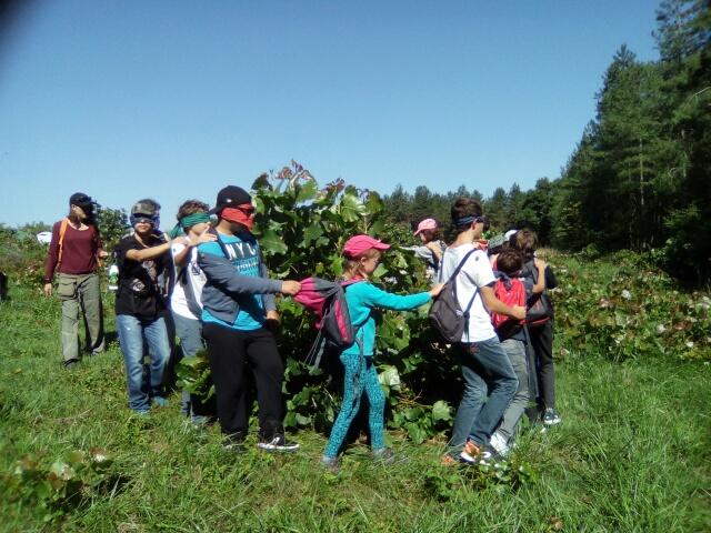 colonies, vacances, enfants, adolescents, nature, confiance, créativité, pour tous, différence, handicap, abeille verte, gers, sud ouest, aquitaine
